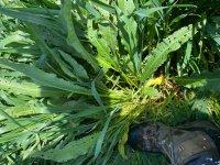 weed2.jpg
